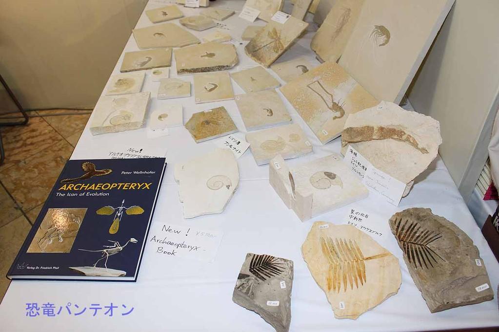 Krautworst Fossils 葉の化石もあります