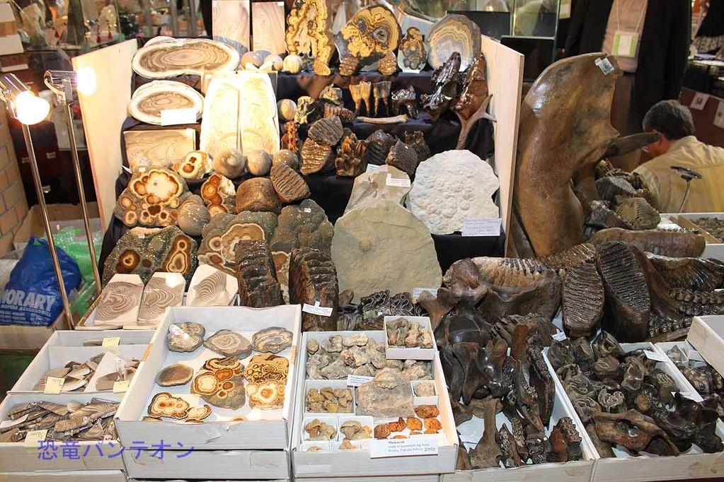 Mijo-Fossils ポーランドからのお店です。マンモスほか哺乳類