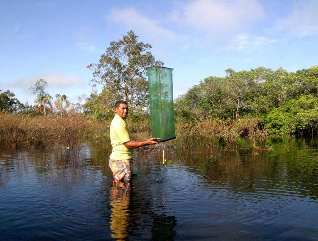 Mit solch einfachen Reusen werden die Rotkopfsalmler (Hemigrammus bleheri) gefangen.