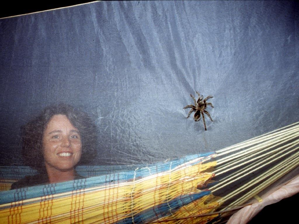 Das Moskitonetz schützt vor unliebsamen Besuchern in der Nacht.