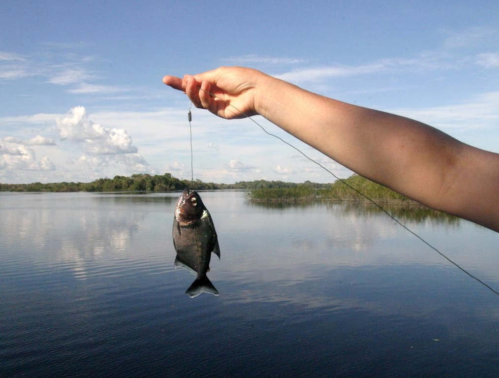 Eva ist eine begeisterte Piranha-Anglerin, immer auf der Suche nach einer neuen Art oder Farbvariante.