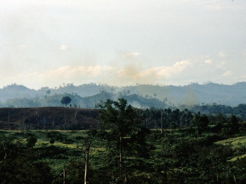 Überall, wo wir hinkamen, sahen wir Brände und zerstörte Wälder.