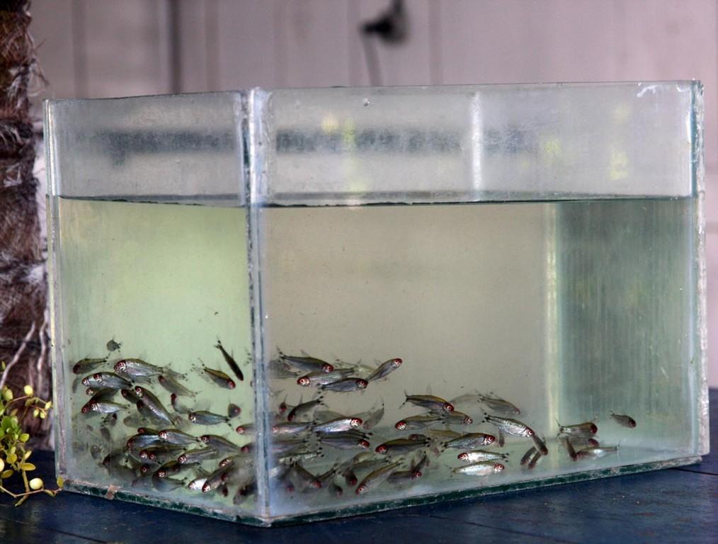 In unserem zerkratzten Aquarium machten wir einige Fotos.
