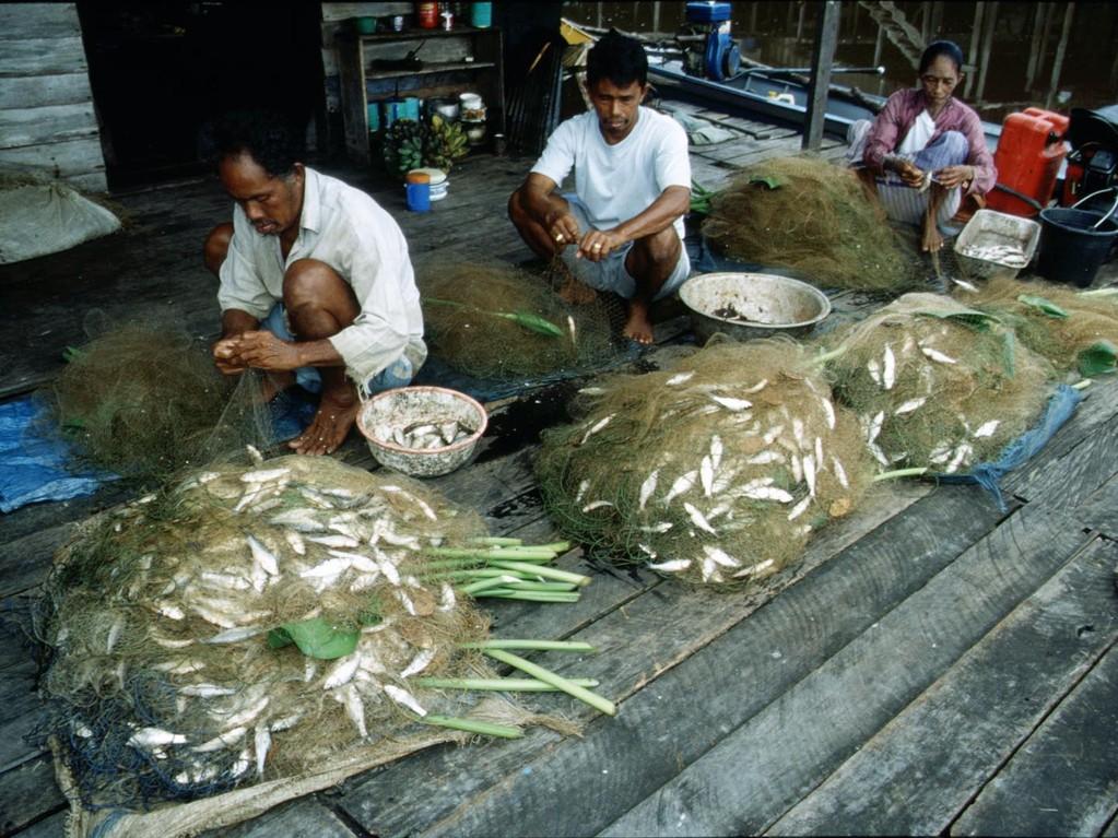 Fische werden von den Netzen befreit.