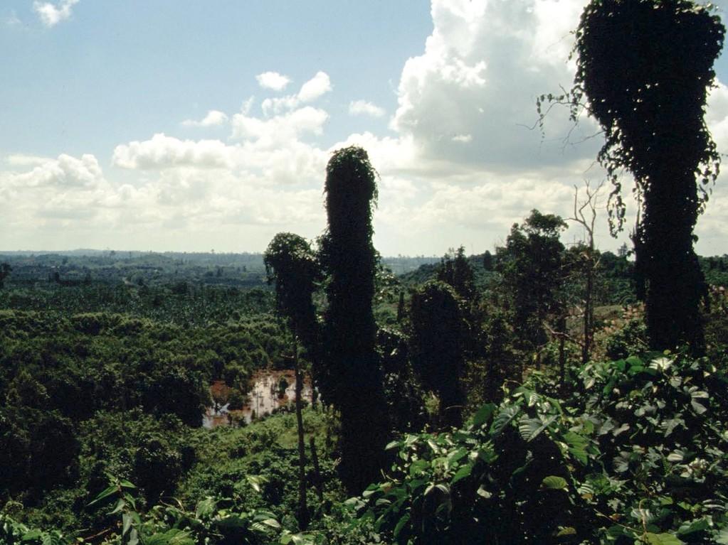 Es ist ein Hohn. In allen Schutzgebieten, die wir sahen, war der Wald gerodet und in Pseudoaktionen wurden Bäume für die Orang–Utans gepflanzt, aber die Massen-Schlägerungen gingen rundum gleichzeitig weiter.