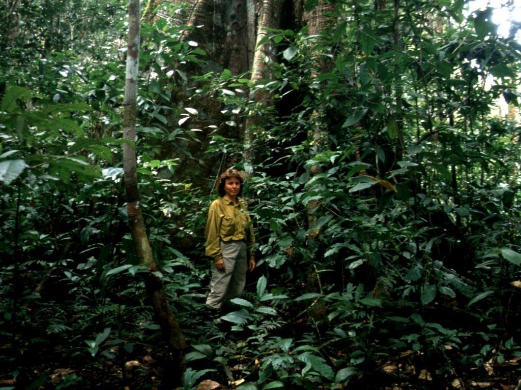 Dieser Wald wird nie überschwemmt, hier kann man Pfeilgiftfrösche finden.