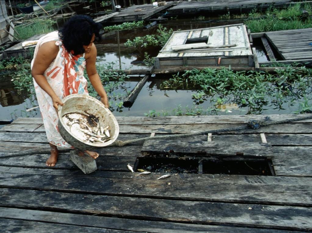 In Aquakultur werden Haiwelse (Pangasius sutchi) als beliebte Speisefische gemästet.
