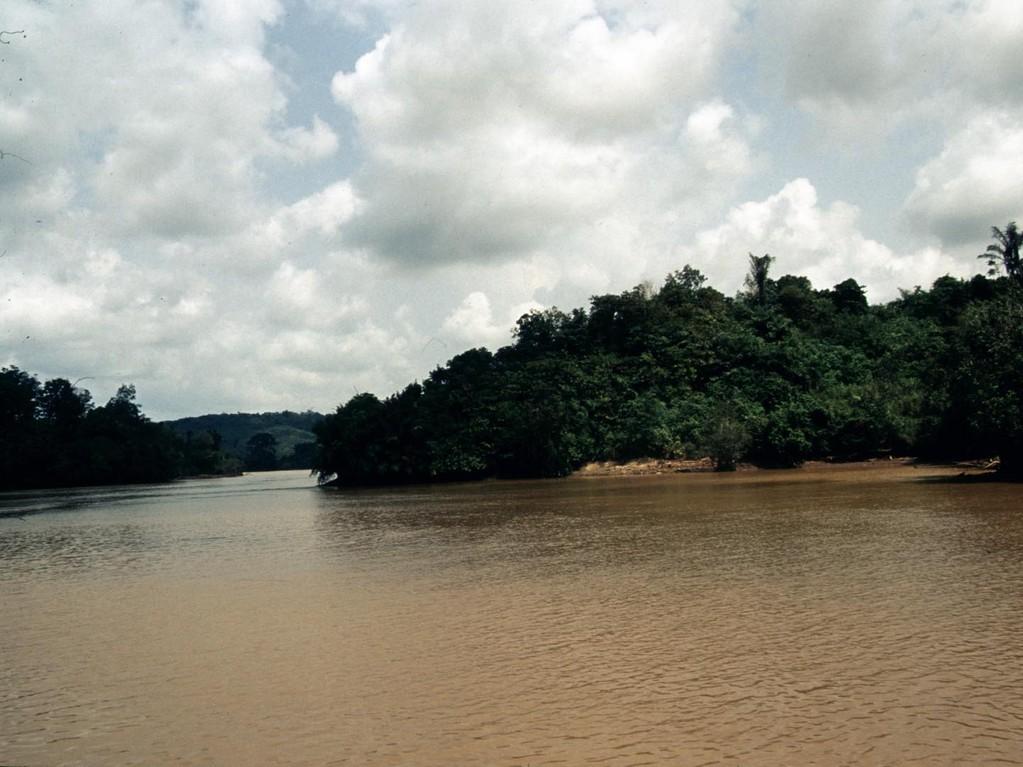 Der Mahakam ist ein Weißwasserfluss, wird aber auch von Schwarzwasserflüssen aus Moorseen gespeist.
