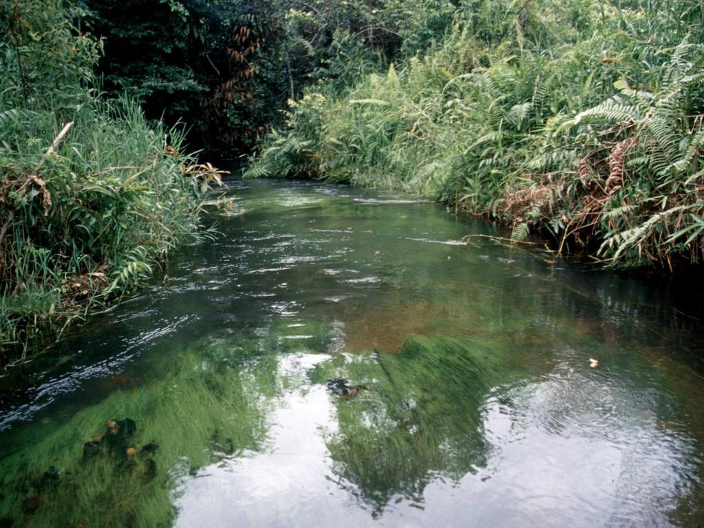 An diesem Klarwasserbach wuschen die Einheimischen ihre Wäsche.