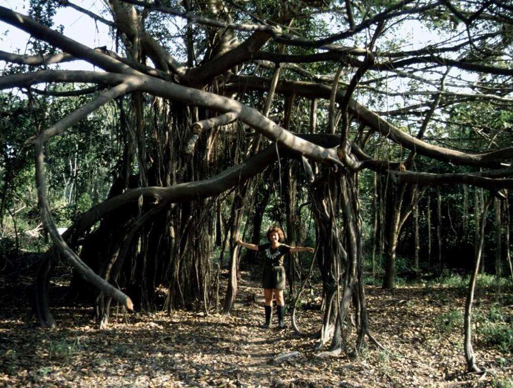 Bei Hochwasser steht dieser Baum 5 Meter hoch im Wasser.
