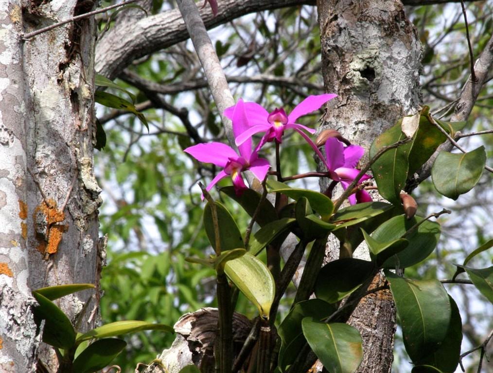 Zu jeder Jahreszeit kann man hier blühende Wild-Orchideen sehen.