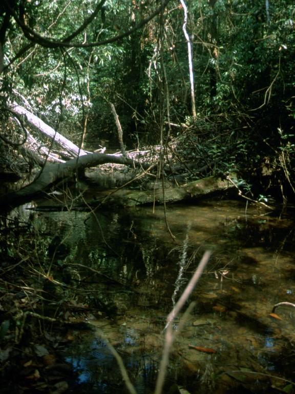 Der Bach als Fließgewässer ist relativ klar.