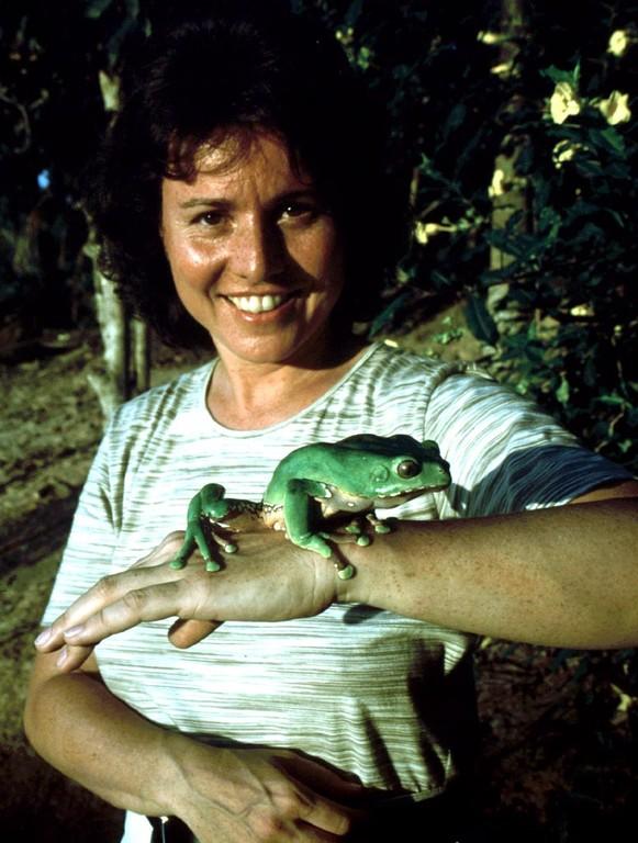 Weibchen des Makifrosches (Phyllomedusa bicolor). Auch die Mayoruna haben die schleimigen Sekrete dieses Frosches traditionellerweise dazu verwendet, um für die Jagd besser gerüstet zu sein.
