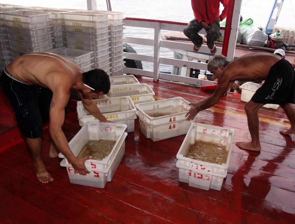 Nach einer halben Stunde waren die Fische verladen.