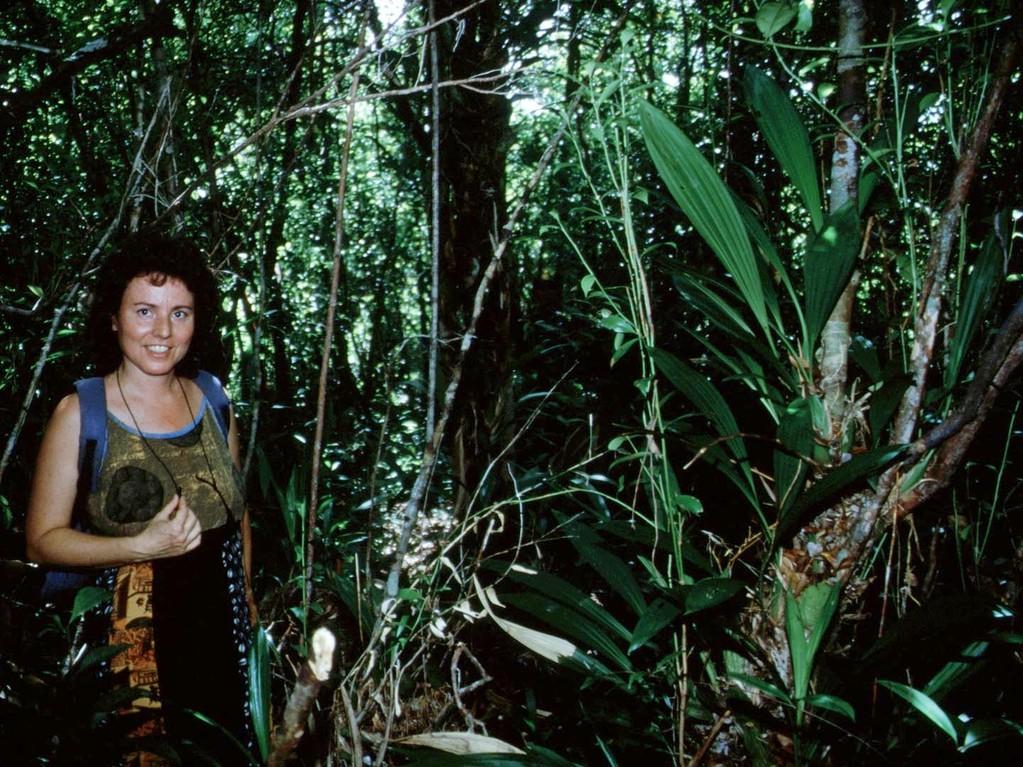 In einem kleinen unscheinbaren Gebüsch konnte die Schwarze Orchidee (Coelogyne pandurata) überleben.