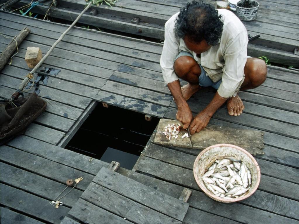 Die Futterfische werden vor dem Verabreichen auf mundgerechte Happen geschnitten.