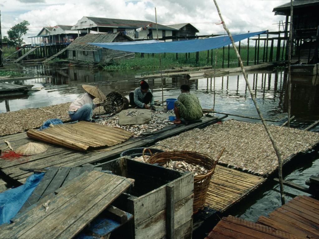 Das Verarbeiten der Fische ist meistens Frauenarbeit.