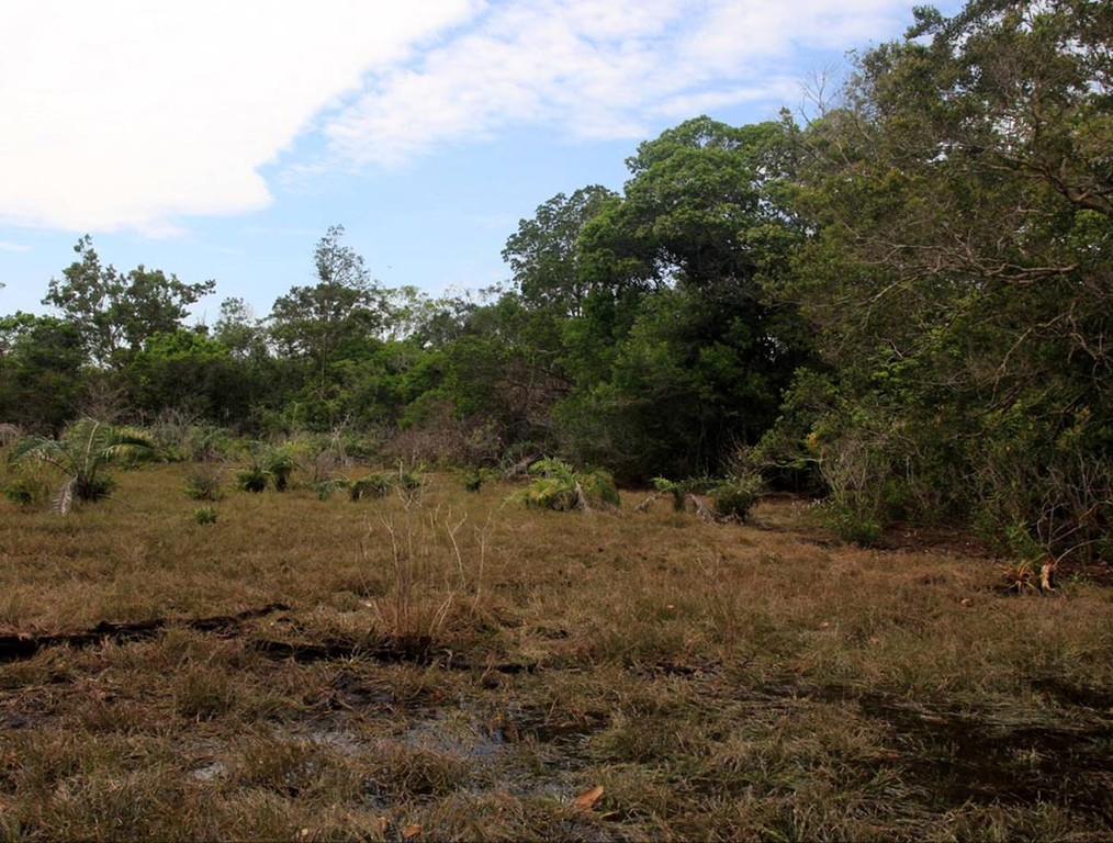 Auf dieser Wiese stand am Vortag noch ein halber Meter Wasser. Hier leben und vermehren sich bei Hochwasser die Schachbrettcichliden (Dicrossus maculatus).