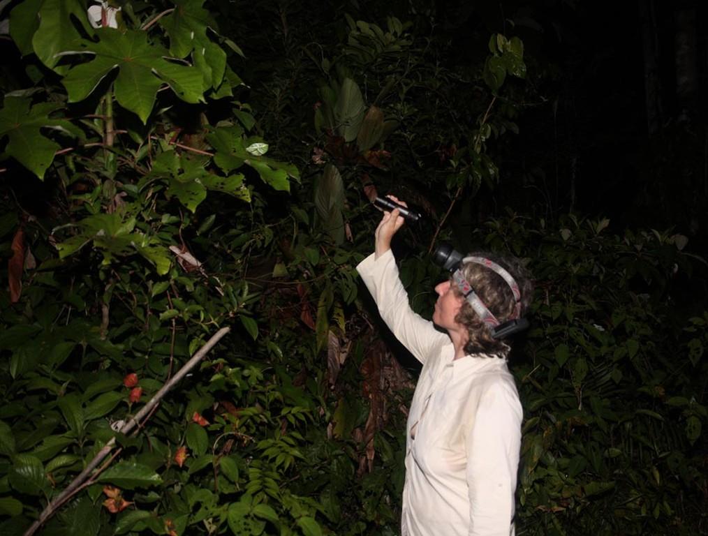 In der Nacht konnte man sehr interessante Laubschrecken finden.