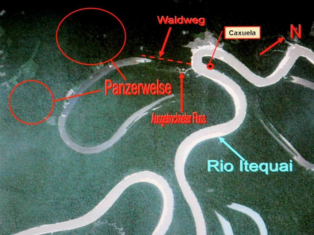 Auf dieser Karte habe ich markiert, wo die Panzerwelse zu finden sind.
