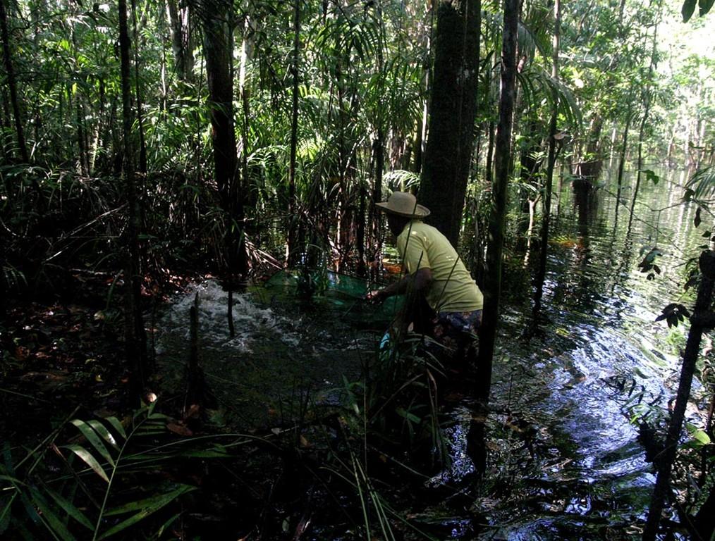 Pineiro hält hier den Kescher einen Meter vom Ufer ins Wasser und schöpft mit einer Plastikschüssel Wasser an den Uferrand. In der Folge springen die dicht unter der Wasseroberfläche schwimmenden Beilbauchfische von selbst ins Netz.