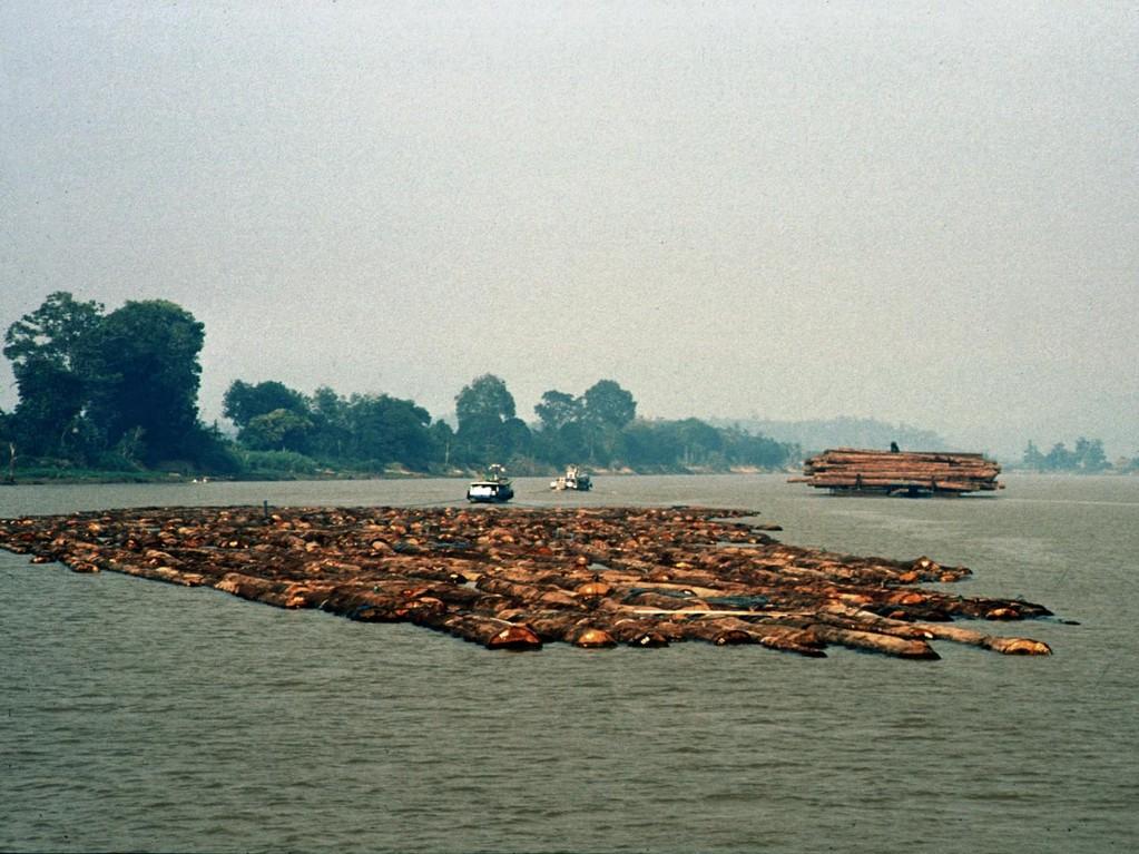 Wenn man den Mahakam hinauffährt, dann begegnet einem ein Holztransport nach dem anderen.