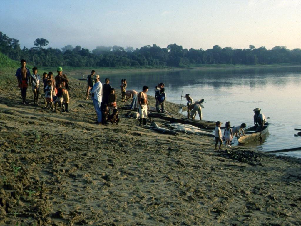 Berufsfischer aus Tabatinga schlachten massenhaft Krokodilkaimane (Caiman crocodilus) und Arapaimas (Arapaima gigas), obwohl ihr Handel seit vielen Jahren verboten ist.