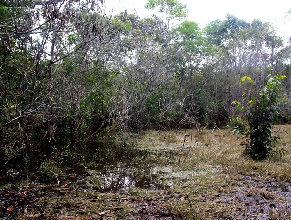 In der Uferzone fanden wir massenhaft junge Schachbrettcichliden (Dicrossus maculatus).