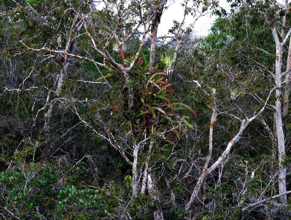Je nach Jahreszeit blühen auch Bromelien und Tillandsien.