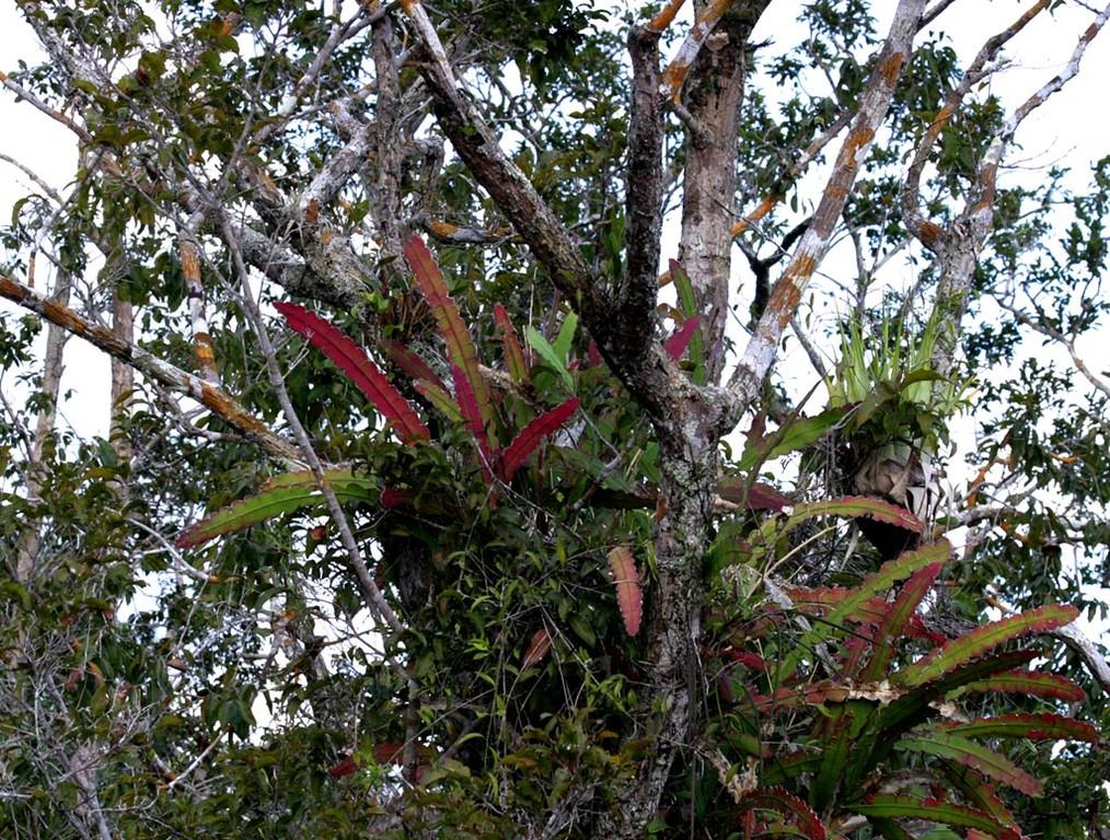 Dieser Kaktus war bereits von weitem zu sehen.
