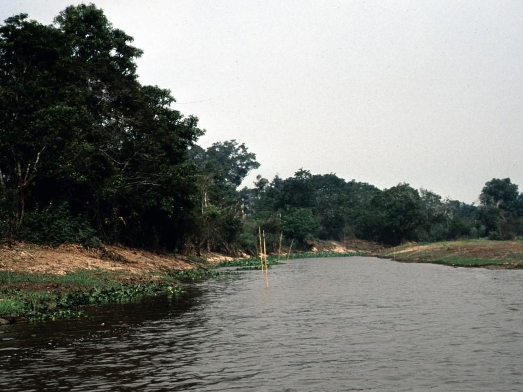 Am Ohong-Fluss stecken Fischer zum Fang von Raubfischen über Nacht Angeln in den Grund.