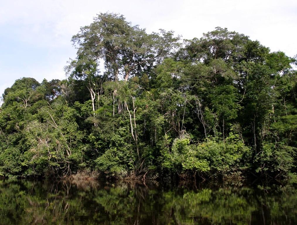 Auf den Bäumen konnte man viele Vogelarten beobachten.