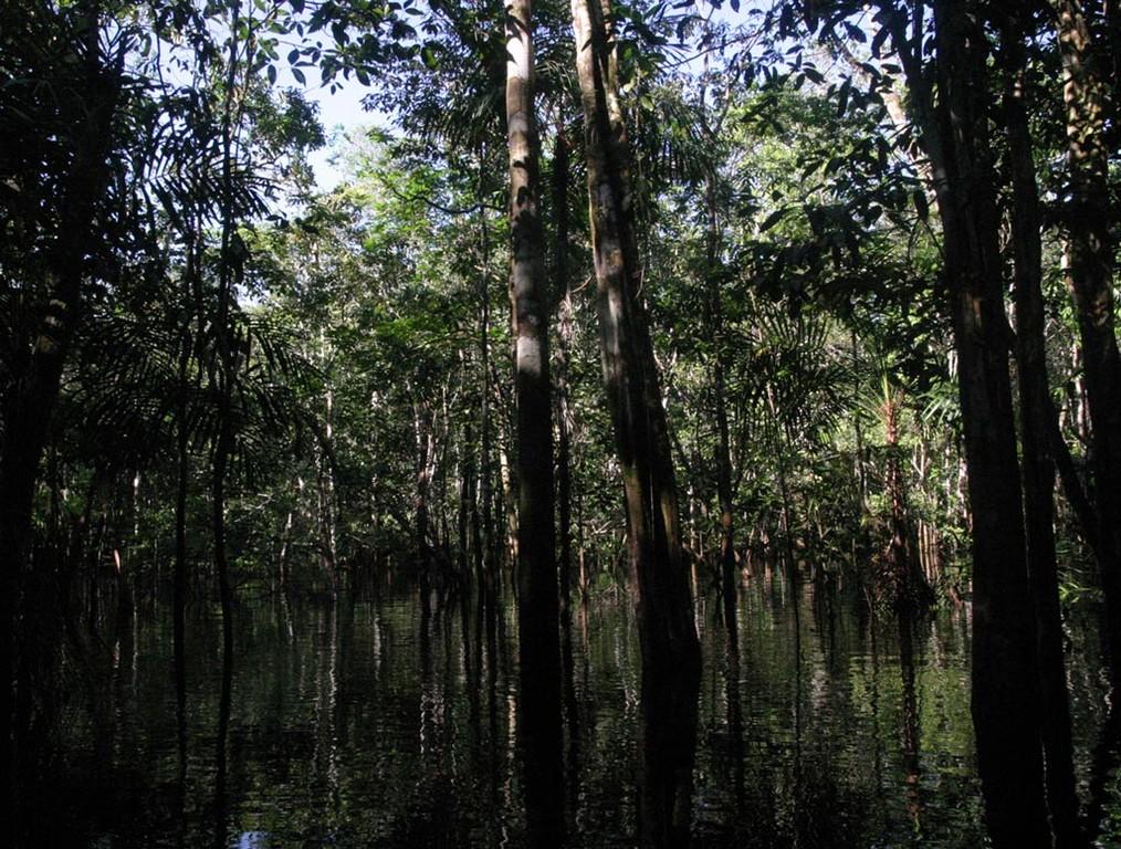 Pineiro führte uns zu einem Biotop des Beilbauchfisches, das in einer schattigen Waldzone liegt.