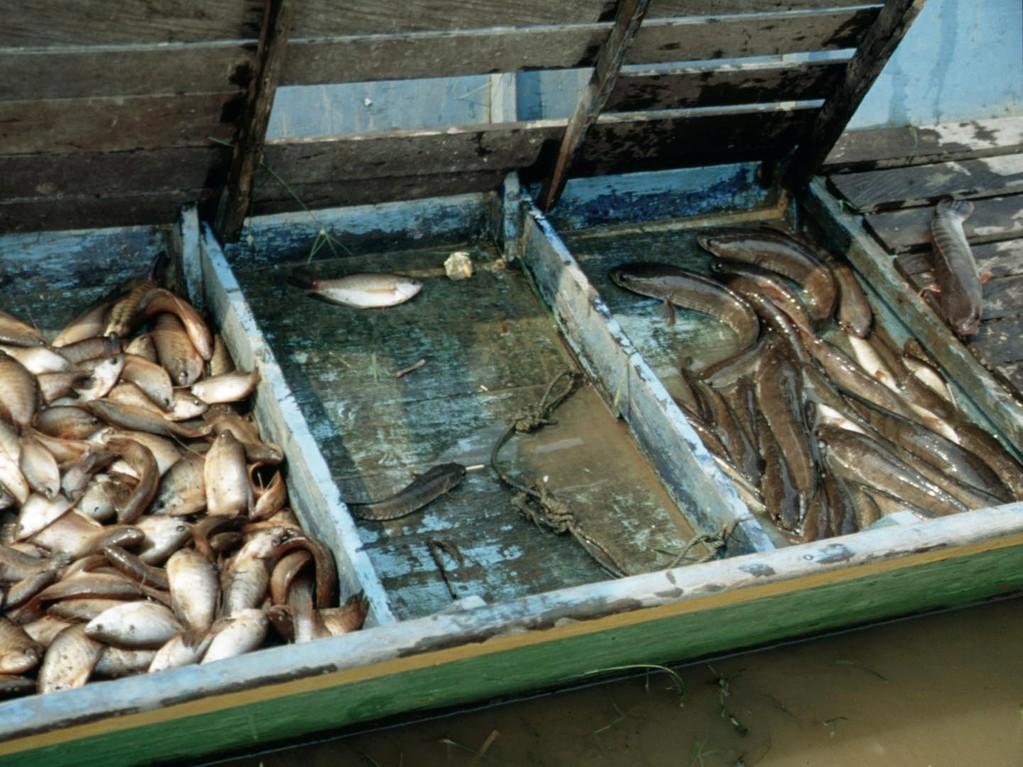Verschiedene Fischarten vor der Verarbeitung zu Trockenfisch.