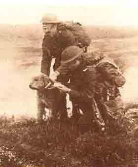 Der Airedale Terrier als Kriegshund im 1. Weltkrieg         Quelle: Airedale Terrier heute, Janet Huxley, Kynos Verlag