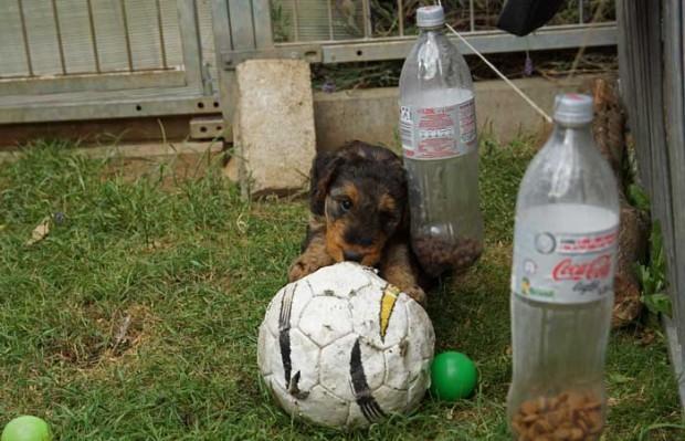 .. Cilly-Fanny bei der WM Vorbereitung ...