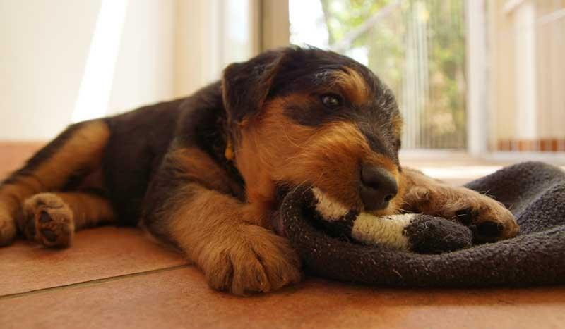 ... und an der Hundedecke kann man auch gut knappern ...