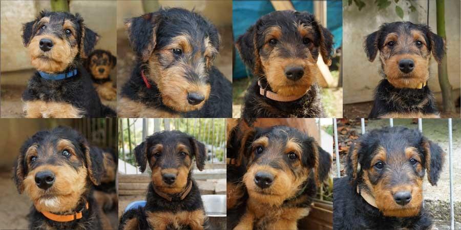 Unsere acht D-Wurf-Hundekinder auf einen Blick