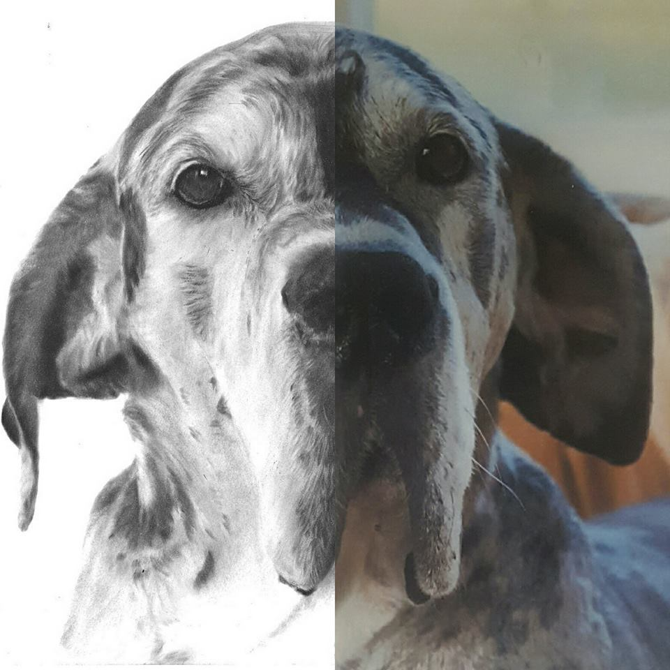 comparisation between a good quality reference photo and the dog portrait
