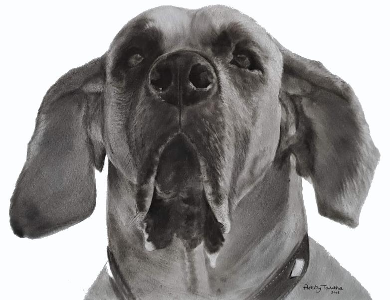 'In liefdevolle herinnering aan Icon de Duitse Dog'
