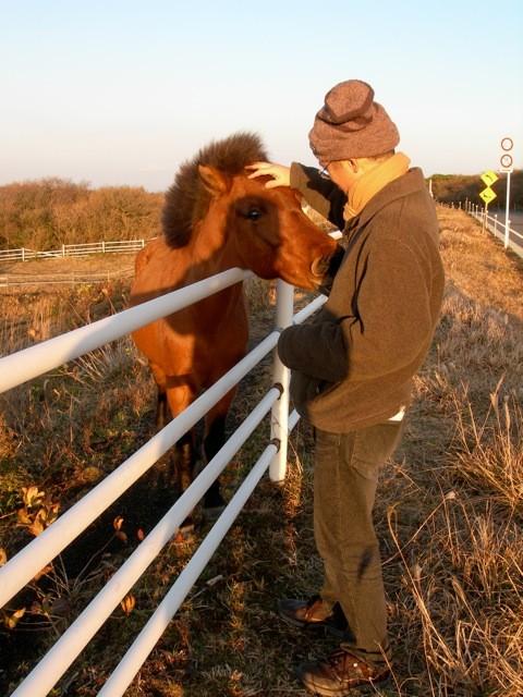 近くに馬が何故かいた。