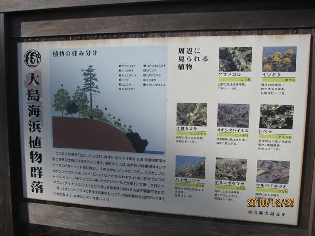 ここは海浜植物の宝庫でもある。