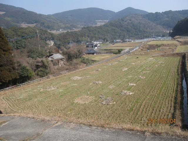 作業前、藁が昨年から放置したままである。少し腐敗していい感じ。