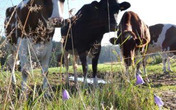Infos zu unserem Milchviehbetrieb...