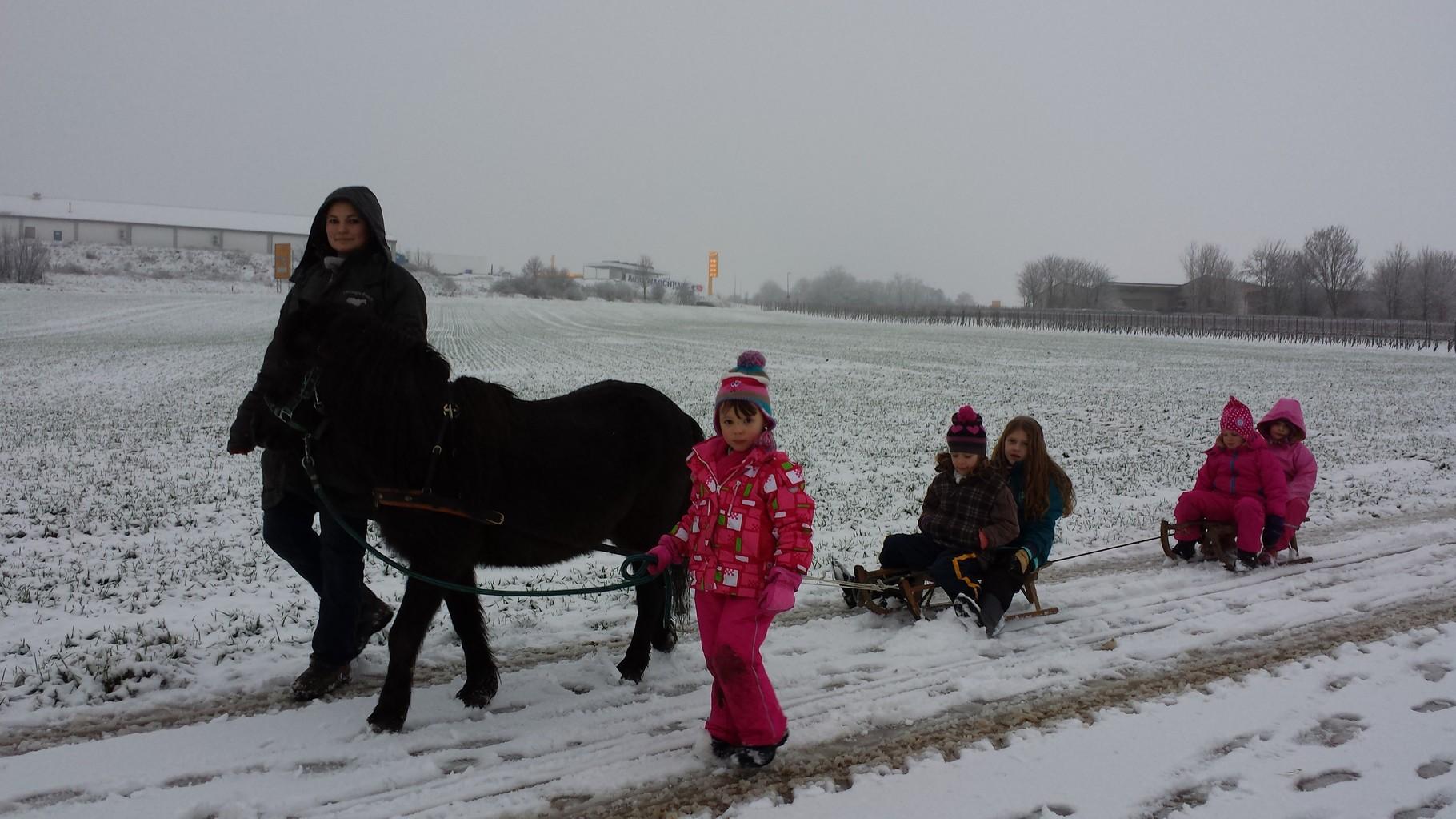 Was Ist Ein Pony Tag Georgia Ranch