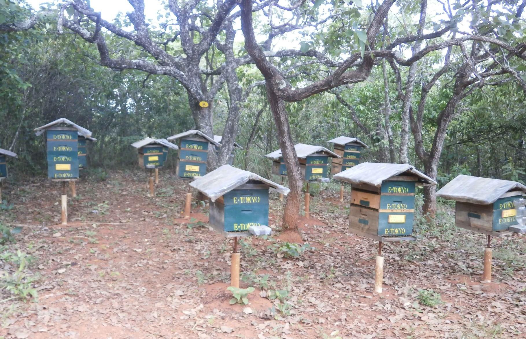 養蜂園内に設置された巣箱(一部は巣箱オーナーの巣箱)