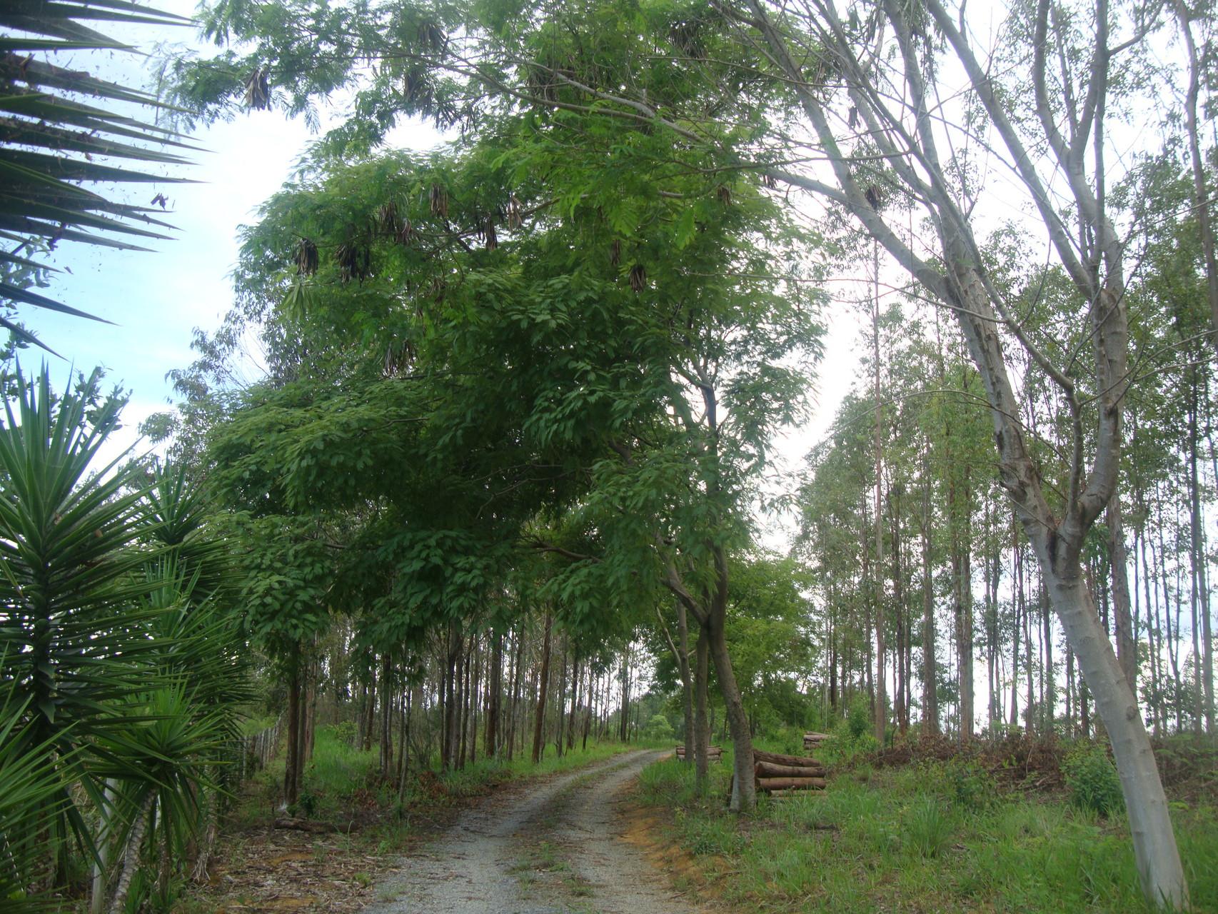 12年前は木々が全くなかった作業小屋への道。