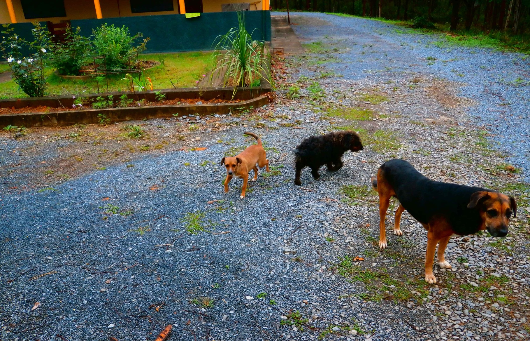 エルザ東京養蜂園の愛娘3匹トリオです