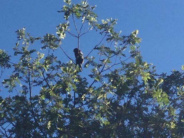 養蜂園内を自在に飛び回っている野生の猿。