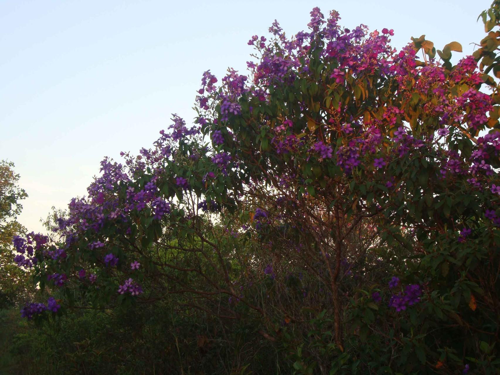 夜明けの光の中に映える巣箱近くの綺麗な紫色の花の木。